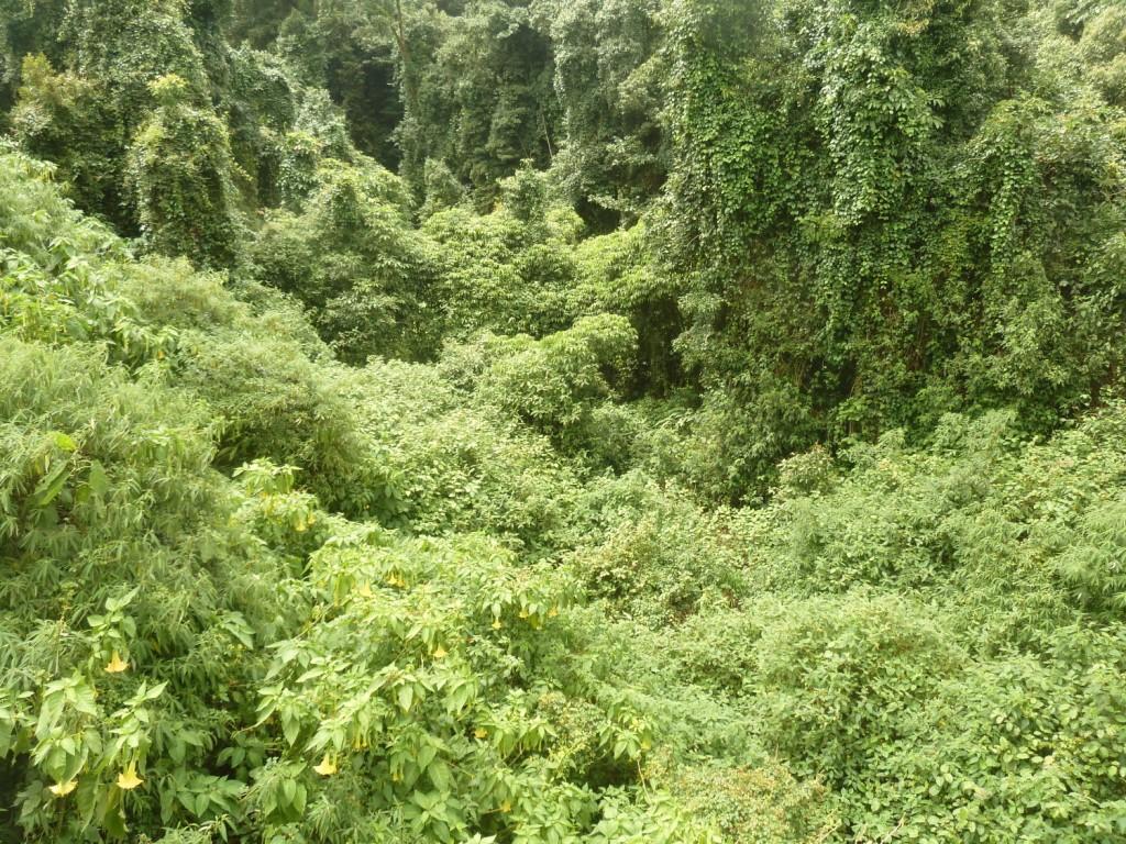 und in das satte grün des Dschungels.