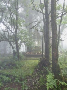 doi-inthanon-nebel