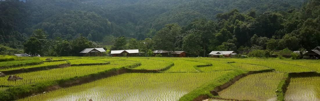 Besuch einer Reisschälmühle – visit of a rice husking mill