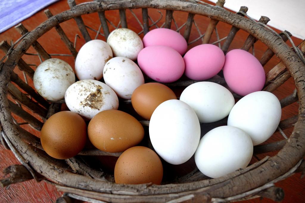 Im Uhrzeigersinn: hundertjährige Eier, gesalzene Enteneier, Hühnereier und Enteneier